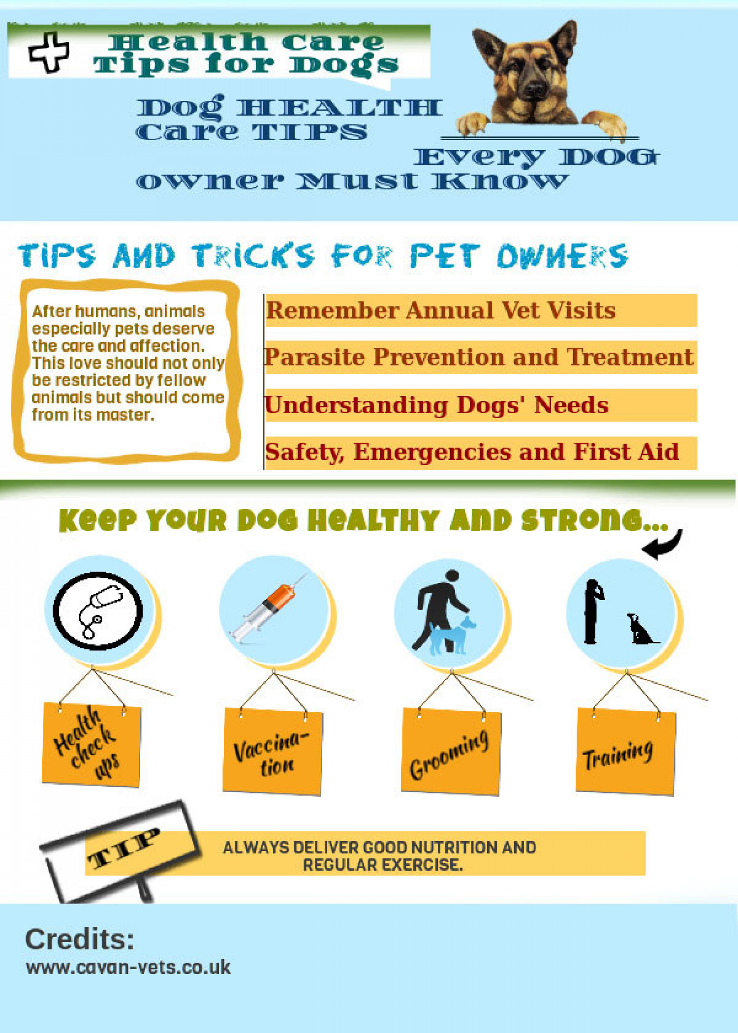 Dog Health Care Tips Infographic