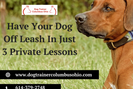 Dog Off Leash Training Lessons by Terry Cook Infographic