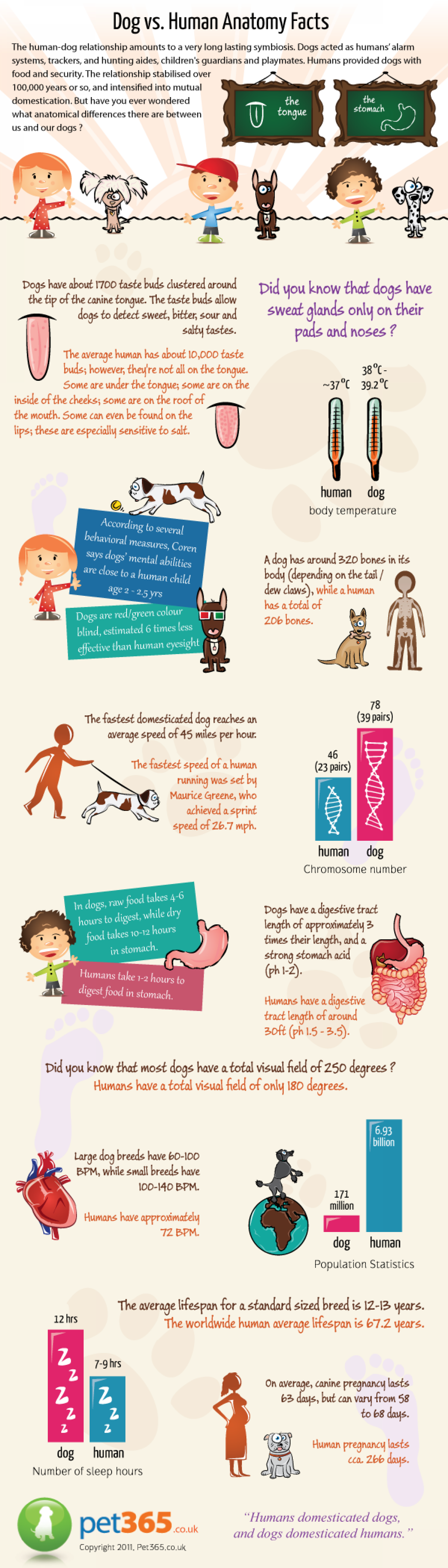 Dog vs Human Anatomy Facts Infographic