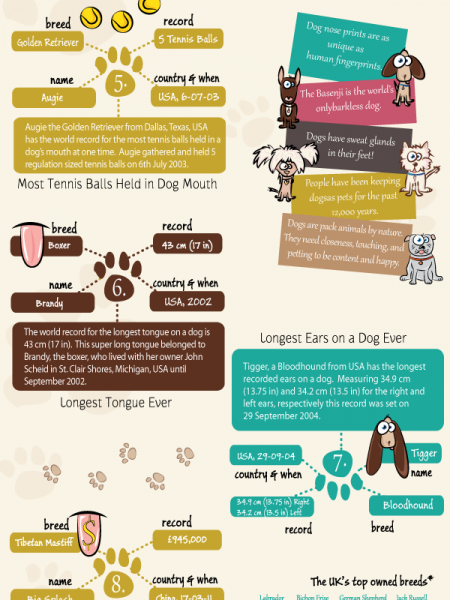 Dog training infographic