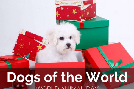 Dogs Of The World - Happy World Animal Day Infographic