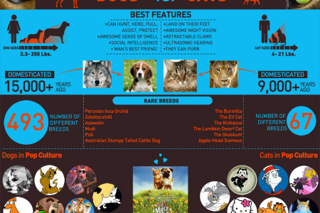 Dogs vs Cats Infographic