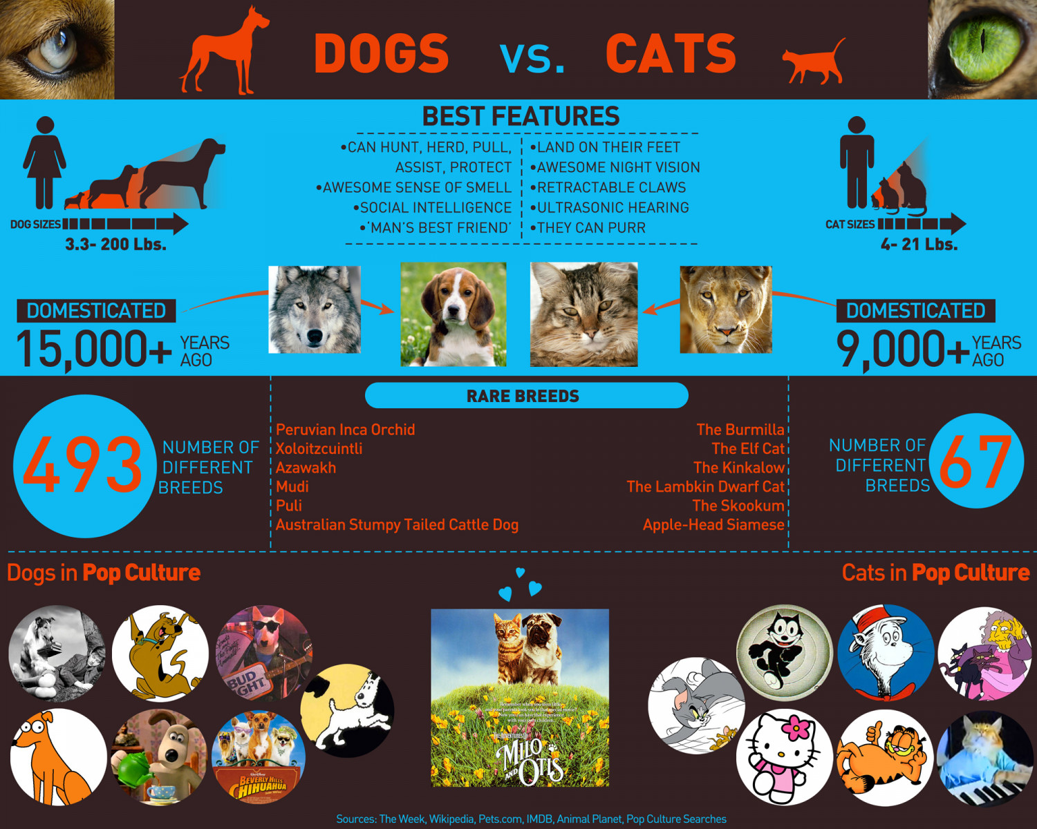 Dogs Vs. Cats Infographic