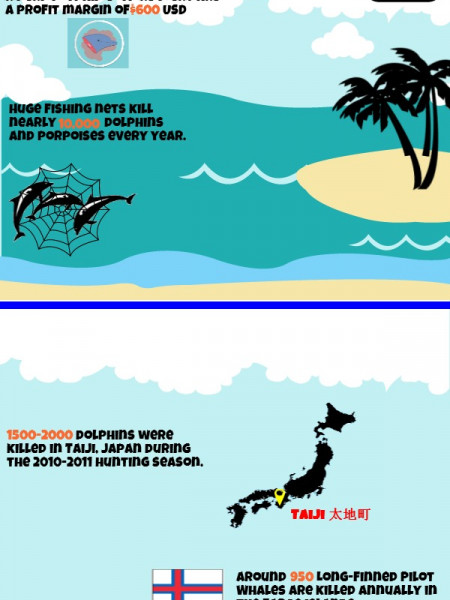 Dolphin Conservation Infographic