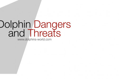 Dolphin Dangers and Threats Infographic