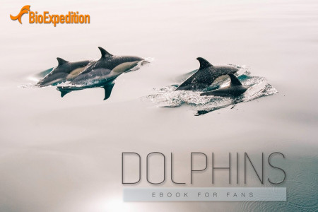 Dolphin Ebook for fans Infographic