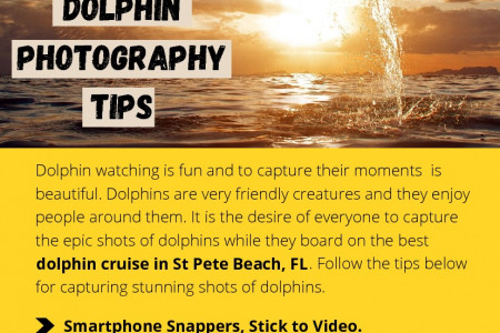 Dolphin Photography Tips Infographic