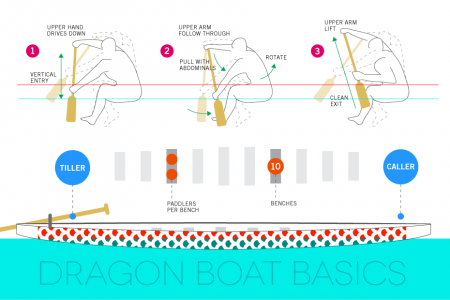 Dragon Boat Basics Infographic
