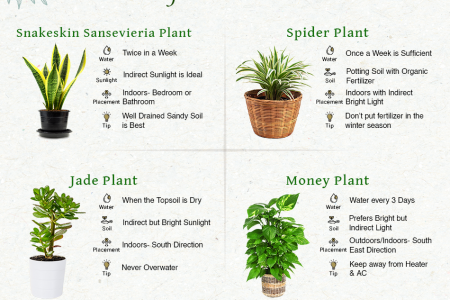 Easy Plant Care Guide for Indoor Home Infographic