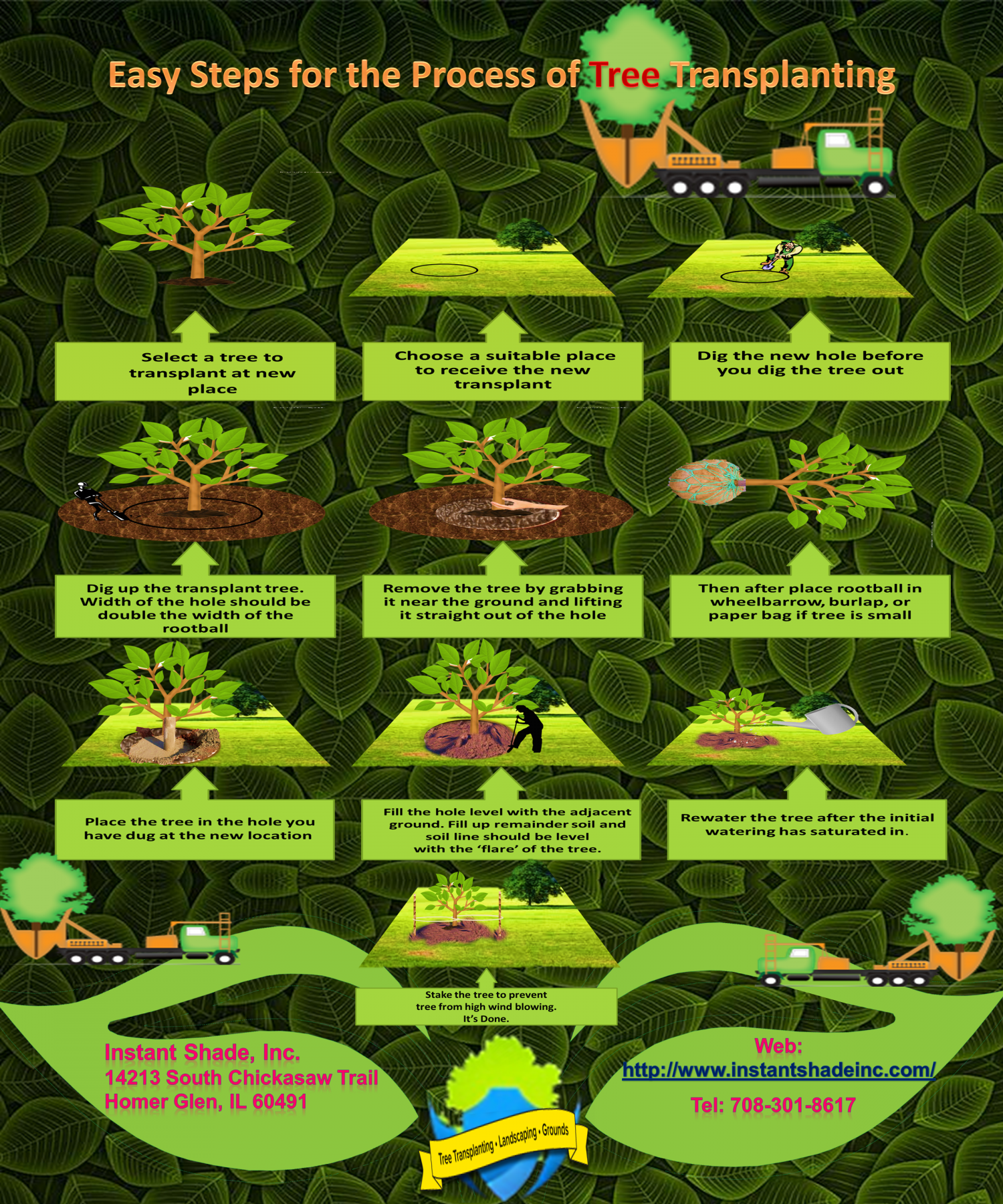 Easy Steps for the Process of Tree Transplanting Infographic