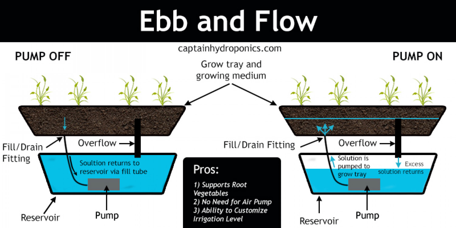 Ebb and Flow Hydroponic System Infographic