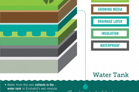 Ecohabit Green Roof & Wall Infograph Infographic