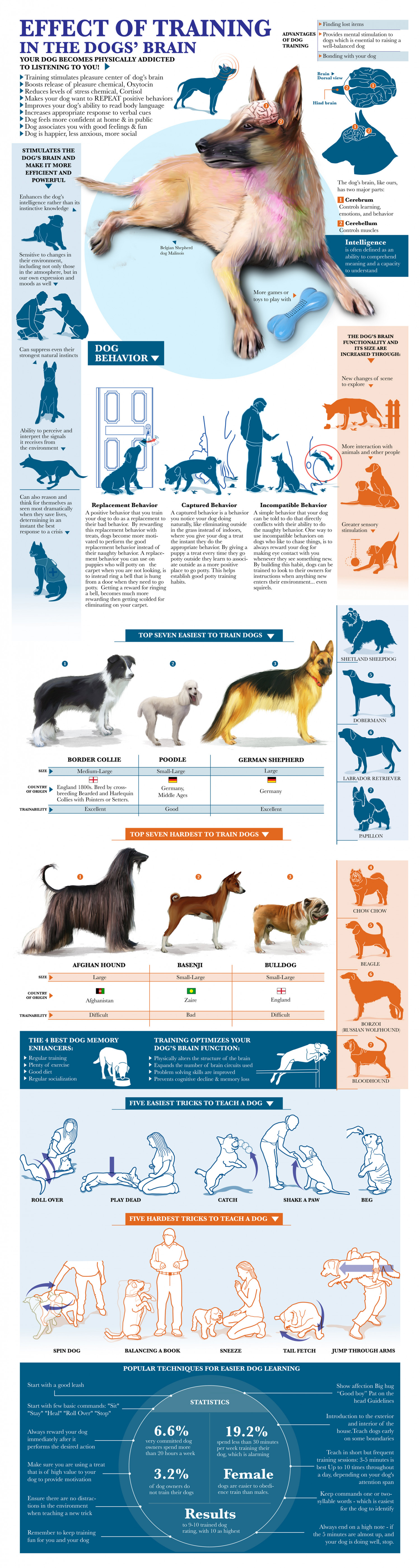 Effect Of Training In The Dog Brain Infographic