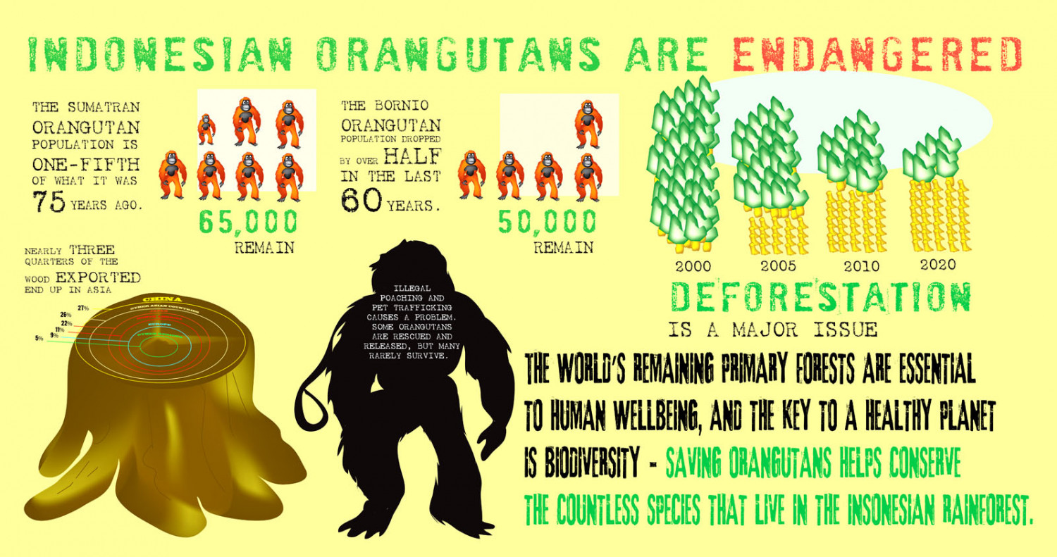 Orangutans are endangered
