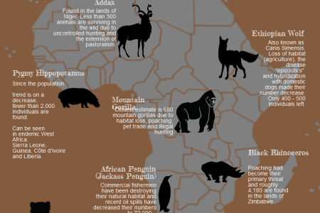 Endangered Species Infographic