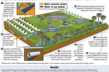 Environmental graphic Infographic