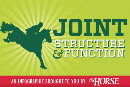 Equine Joint Structure and Function Infographic