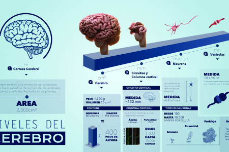 Escalas del Cerebro Infographic