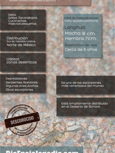 Escorpión de Corteza de Arizona Infographic