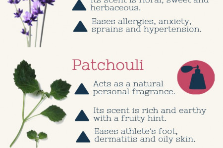 Essential Oils and Their Uses Infographic