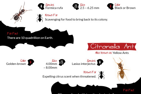Everything You Need To Know About Ants Infographic