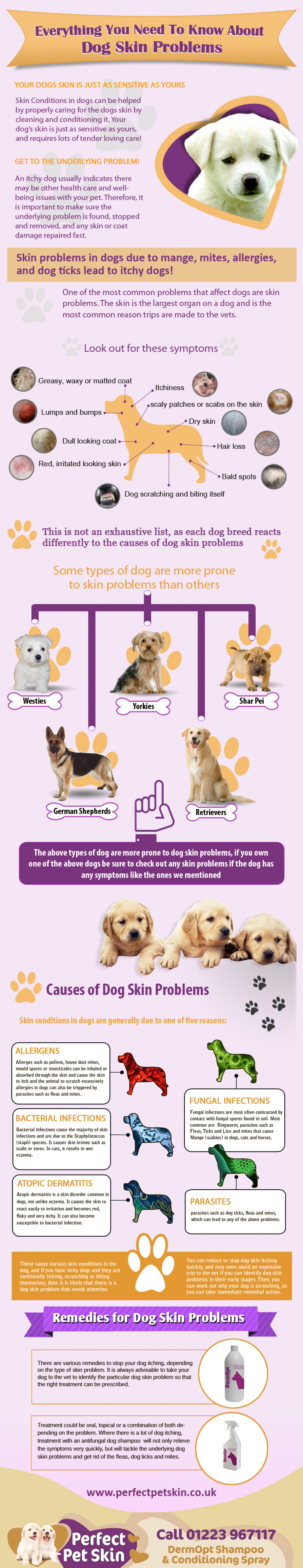 Everything You Need To Know About Dog Skin Problems Infographic