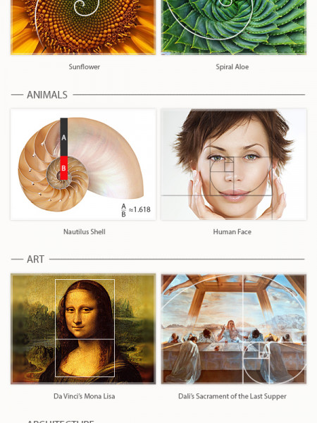 A Complete Guide To The Golden Ratio Infographic