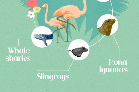 Exploring The Caribbean Infographic
