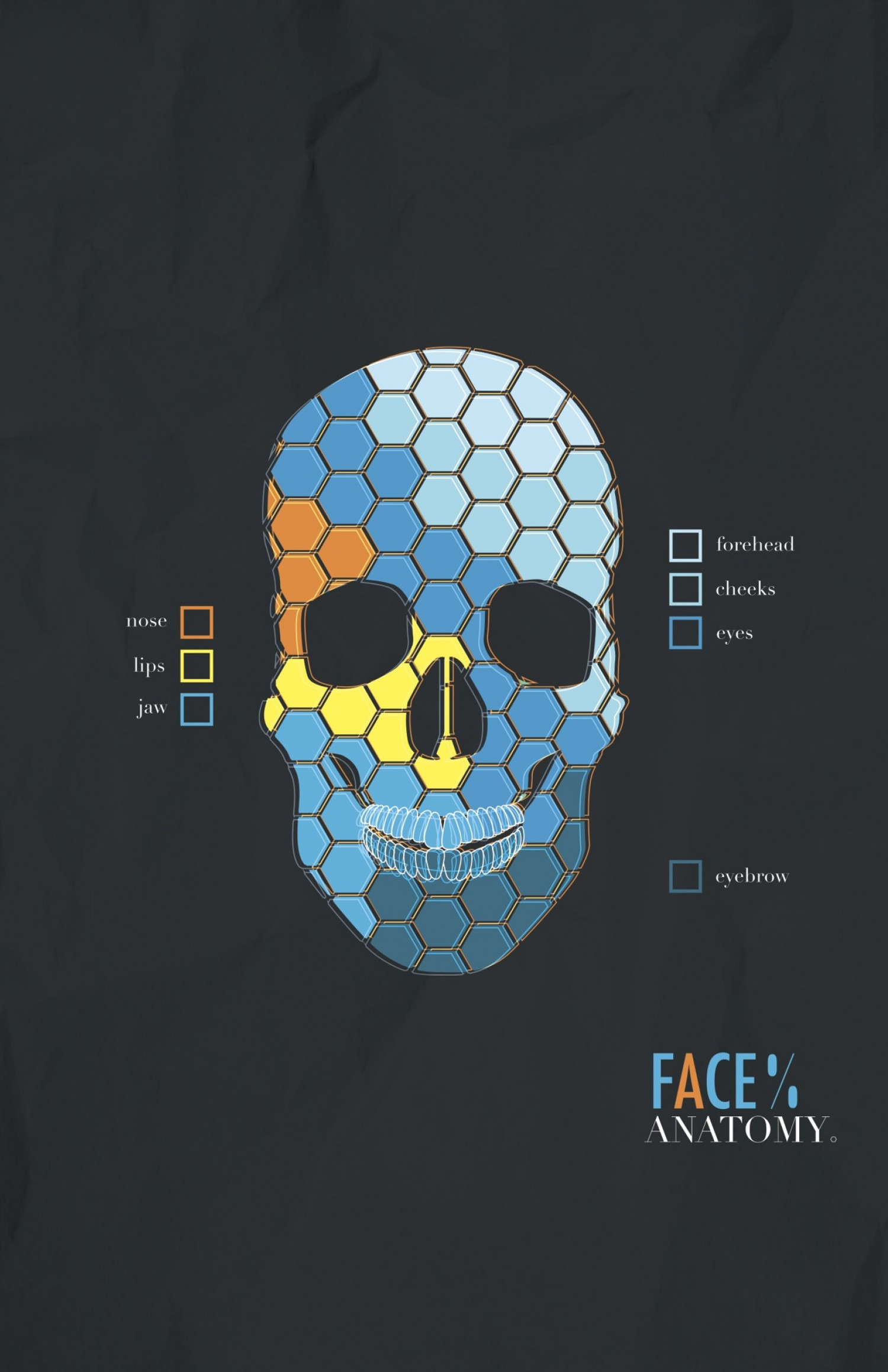 FACE% Anatomy Infographic
