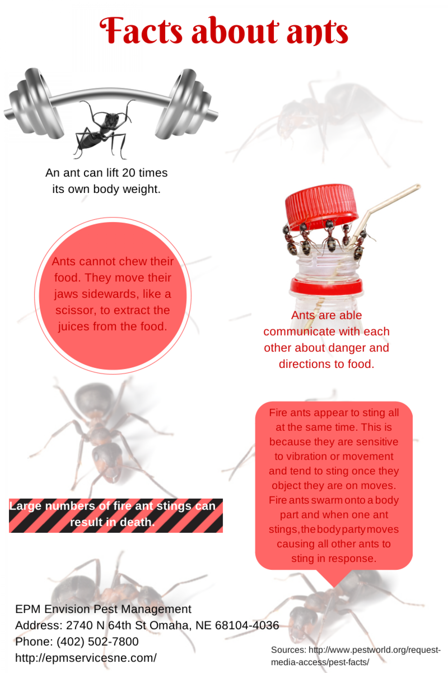 Facts About Ants Infographic