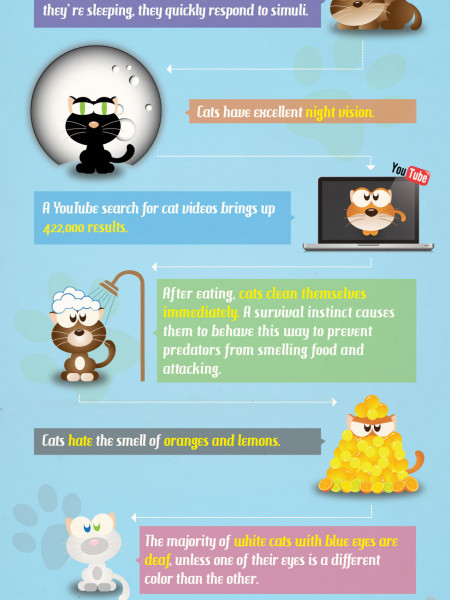 Facts about cats Infographic