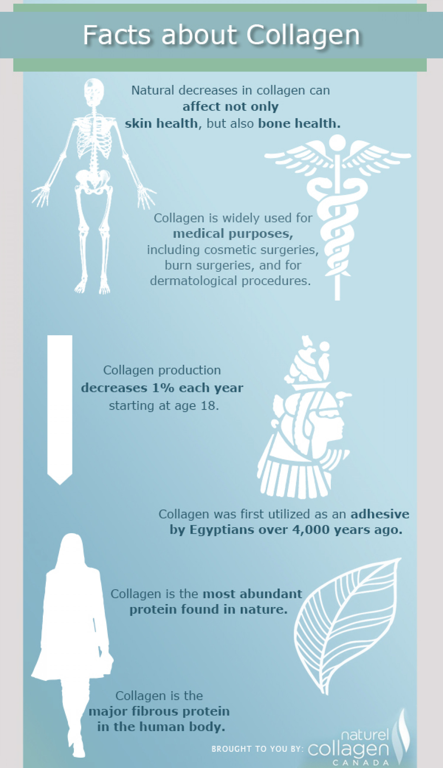 Facts About Collagen Infographic