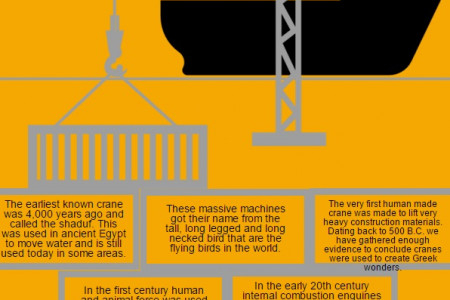 Facts About Cranes Infographic