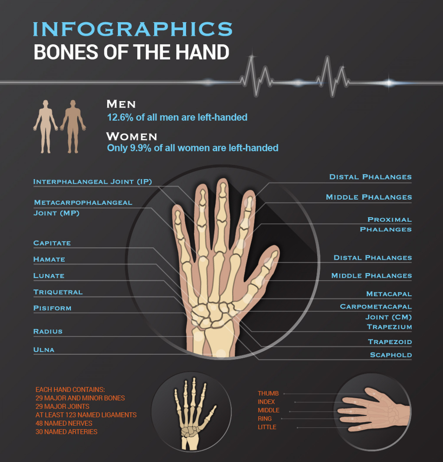Bones of the Hand Infographic