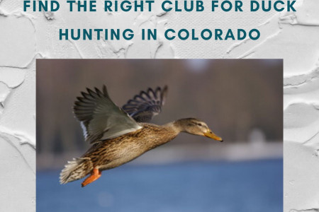Find the right club for Duck Hunting in Colorado Infographic