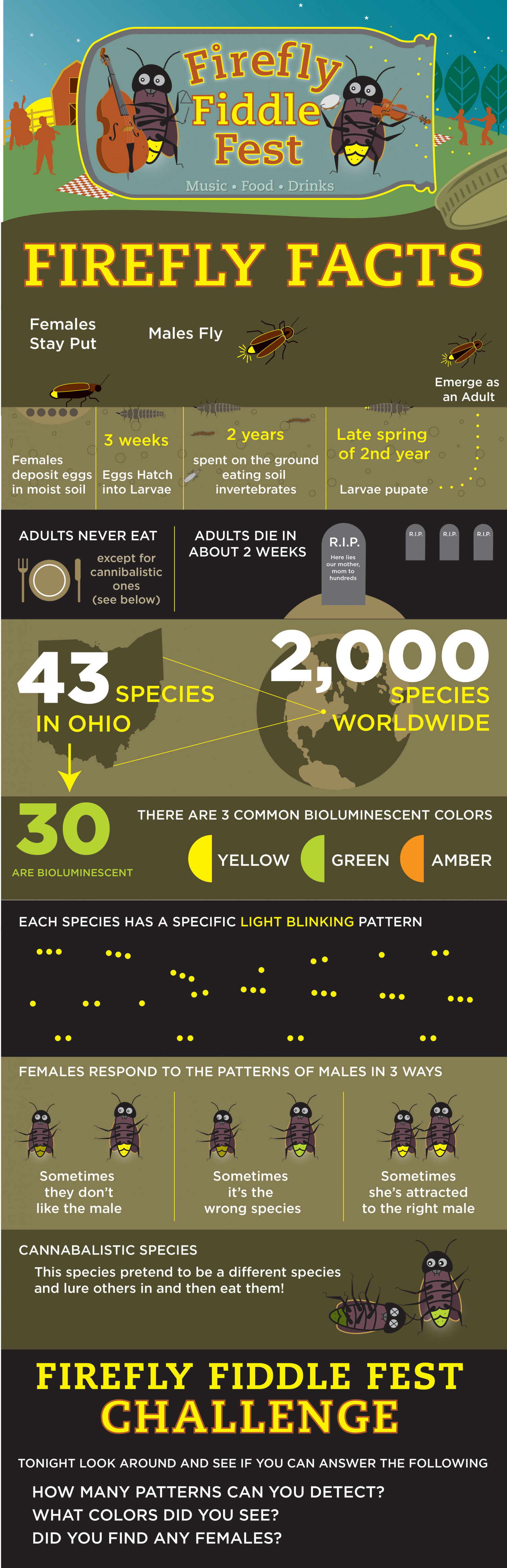 Firefly Facts Infographic