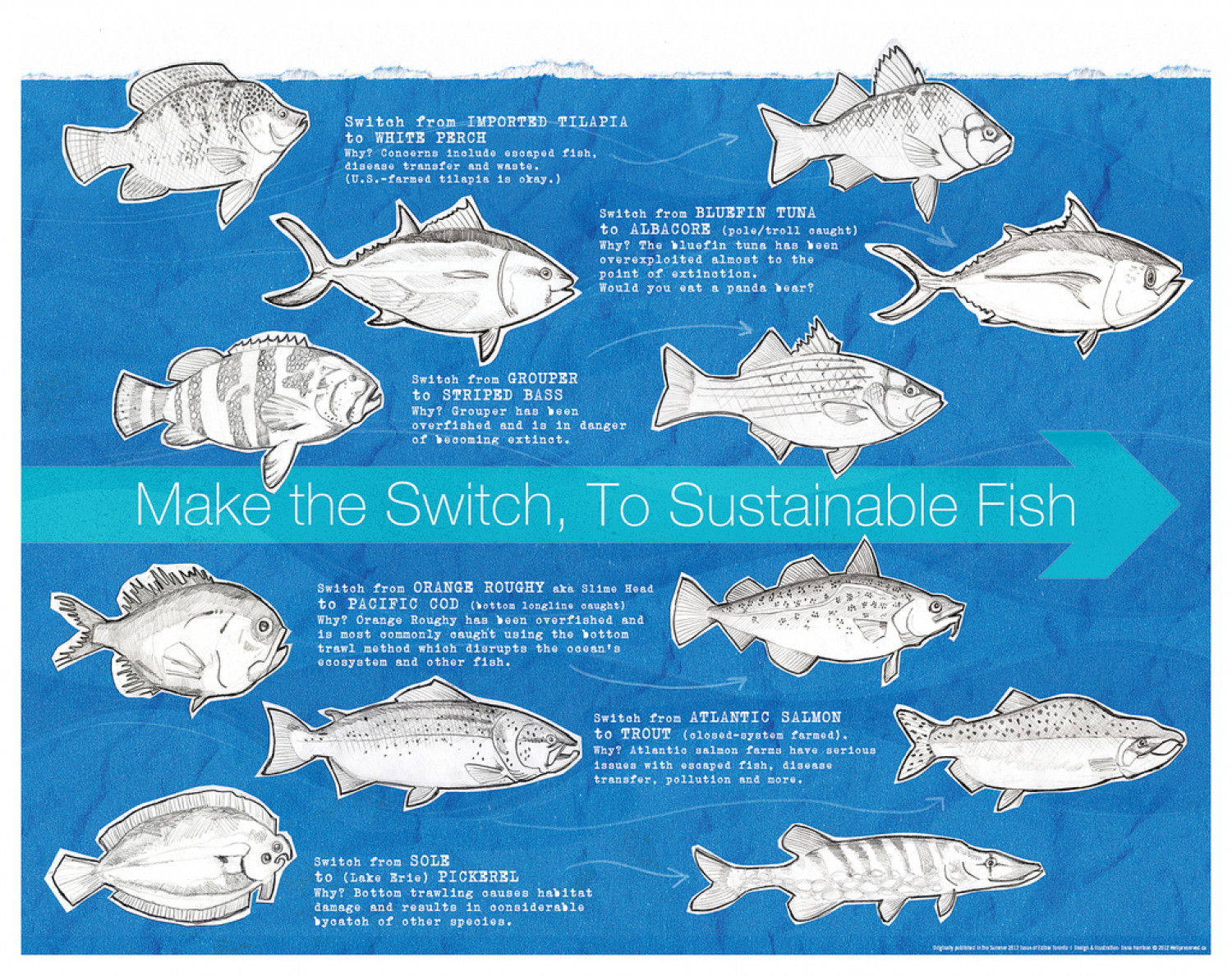 Fish Friday: Sustainable Fish Infographic