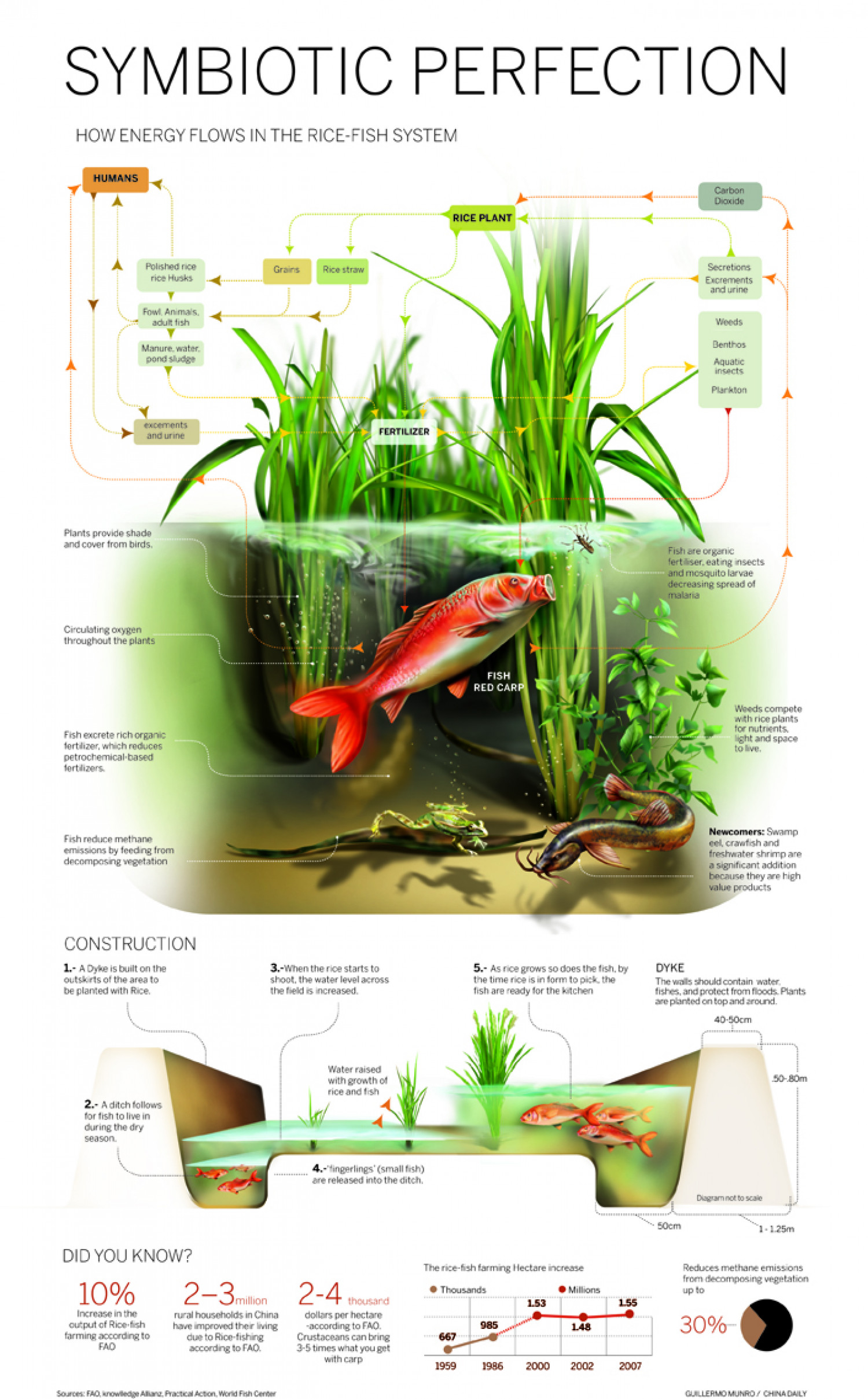 Fish-Rice farming Infographic