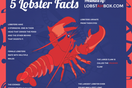 Five Lobster Facts Infographic