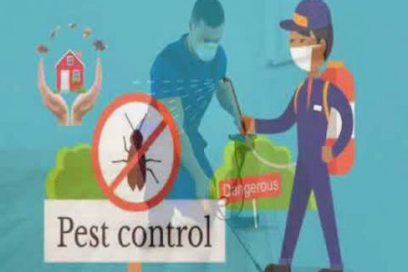 Flies Control Services in Delhi Local Infographic