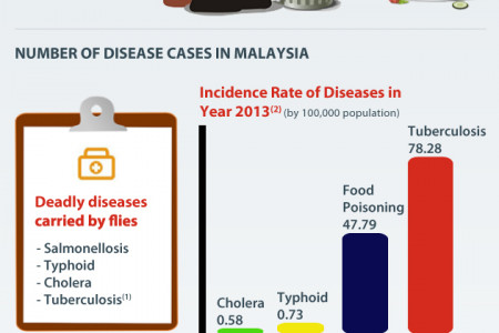 Flies Infestation in Malaysia Infographic