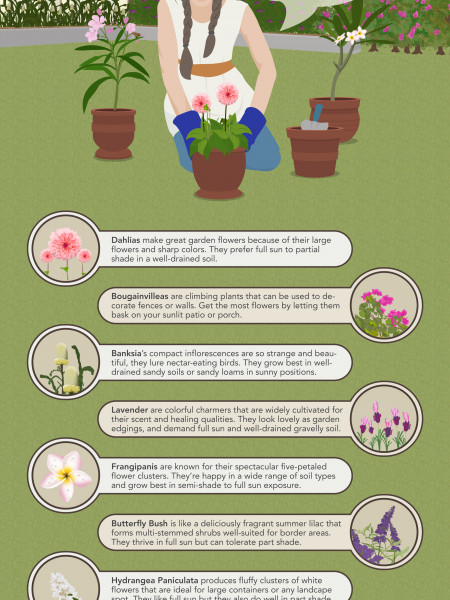 Flowers and Shrubs to Grow This Summer  Infographic