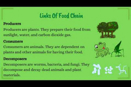 Food Chain and Food Web Infographic