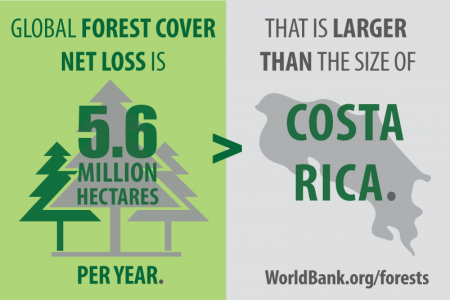 Forest and Trees: How Much Are We Losing Each Year?  Infographic