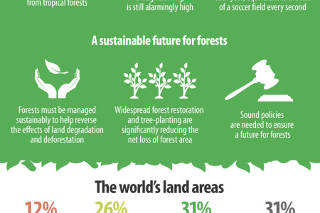 Forests and land use Infographic