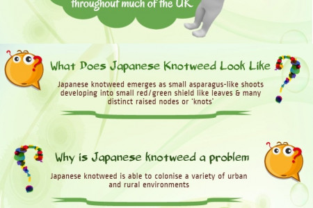 Frequently Asked Questions About Japanese Knotweed Infographic