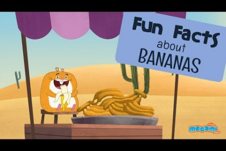 Fun Facts about Bananas Infographic