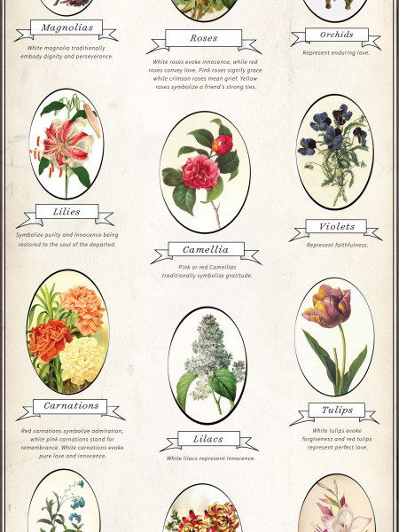 funeral flowers and their meanings infographic. Black Bedroom Furniture Sets. Home Design Ideas