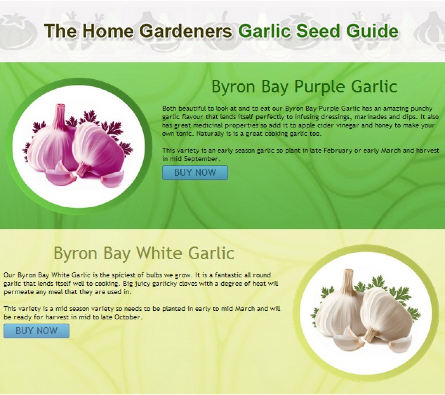 Garlic Seed Guide Infographic