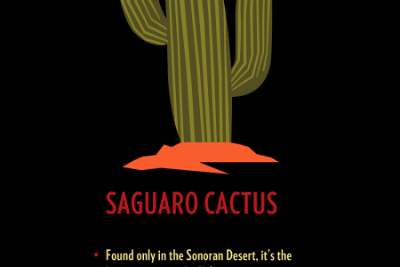 Get the Facts on Cacti! Infographic